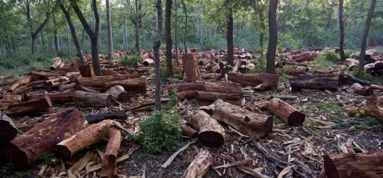 ALERTA SĂPTĂMÂNII: Majoritatea PSD & ALDE vrea să desființeze Ordonanța care apără pădurile. Rămâneți aproape, avem nevoie de sprijin!