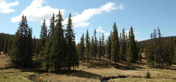 MHC-urile în zona Măguri-Răcătău ar distruge ecosisteme valoroase