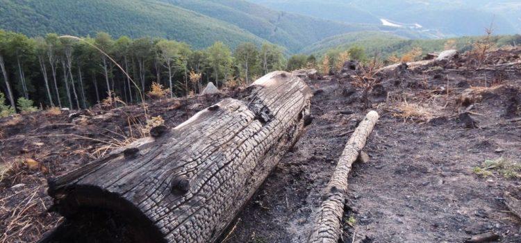 Mihai Goțiu solicită anchetă a Corpului de Control al Primului-Ministru cu privire la incendiile din Parcul Național Semenic (Vezi FOTO după incendiu)