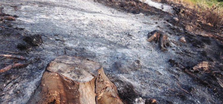Doamnă ministru Doina Pană, ce decizie e asta? Termen de grație pentru hoții de lemne? Să poată fura liniștiți încă un an și jumătate?!