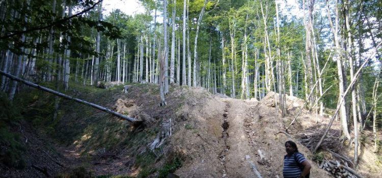 """Goțiu: """"Romsilva va trebui să-mi răspundă la multe întrebări legate de protejarea parcurilor naționale. Siturile UNESCO pot aduce mai multe beneficii României decât oaia lui Daea."""""""