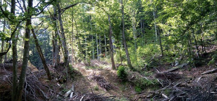Reacții extraordinare în favoarea propunerii senatorului Mihai Goțiu de interzicere a tăierilor de păduri în Parcurile Naționale