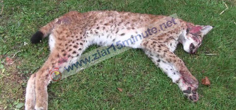 STOP masacrului animalelor sălbatice din Rezervația Cheile Turenilor (Interpelări pentru miniștrii Mediului și Transporturilor)