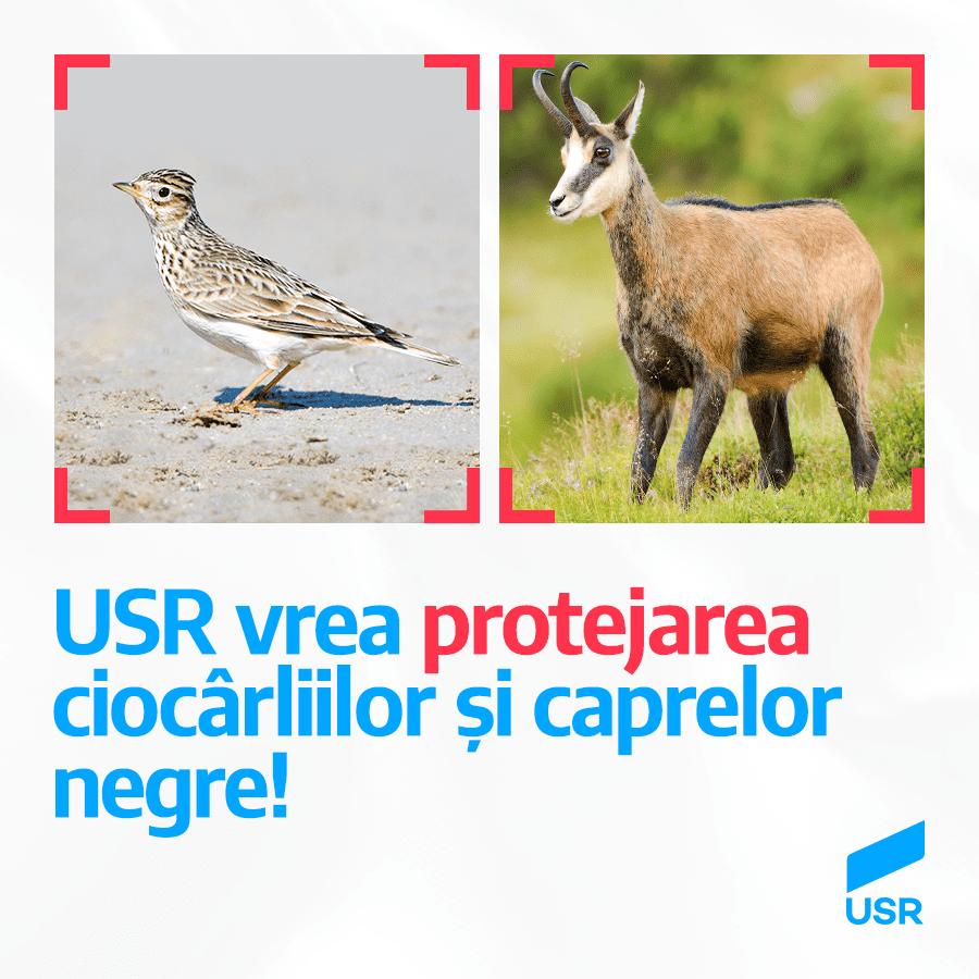 """Legi USR pentru salvarea ciocârliilor și a caprelor negre. Goțiu: """"Ministrul să-și pună pofta-n cui!"""""""