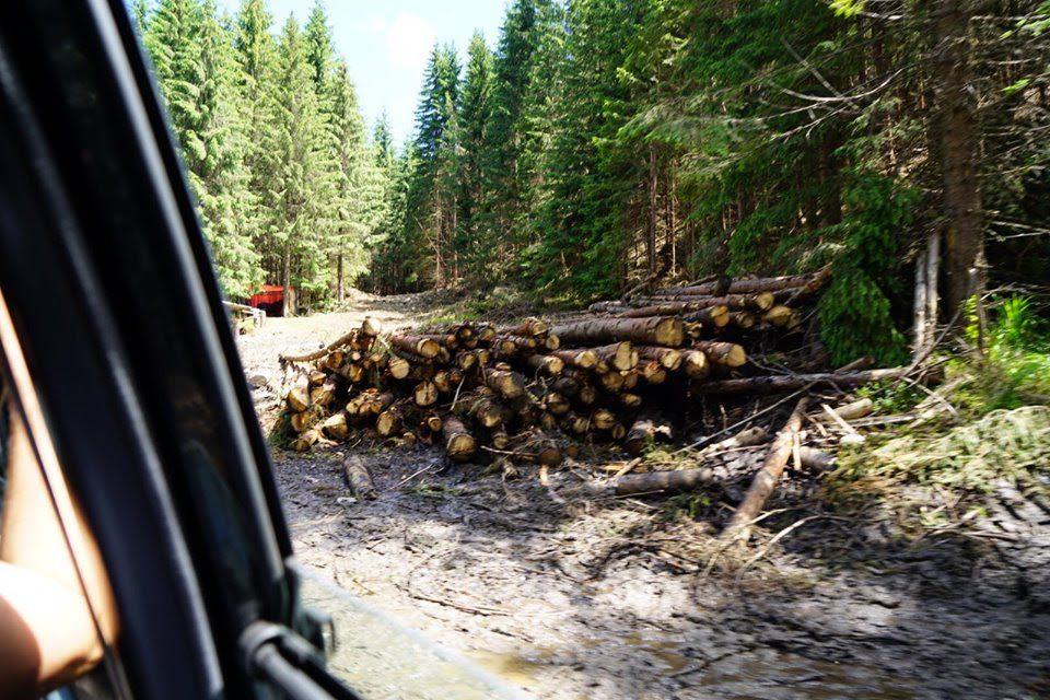 Mihai Goțiu (USR), denunț la DNA pentru tăierile ilegale de păduri din Munții Făgăraș