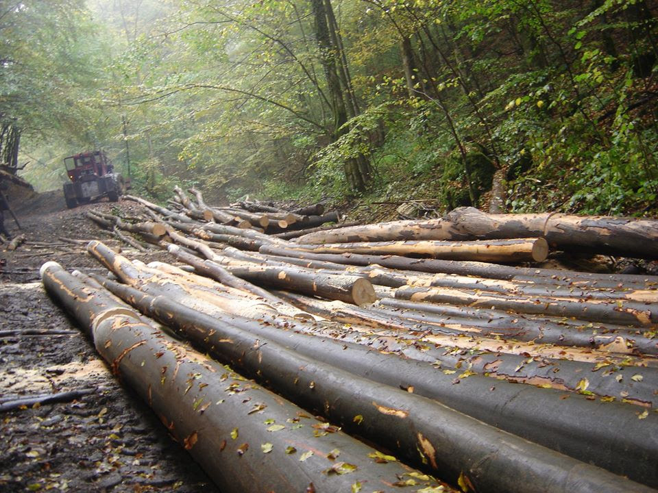 Sancțiuni dure pentru firmele care distrug pădurea, luate la inițiativa senatorului USR Mihai Goțiu