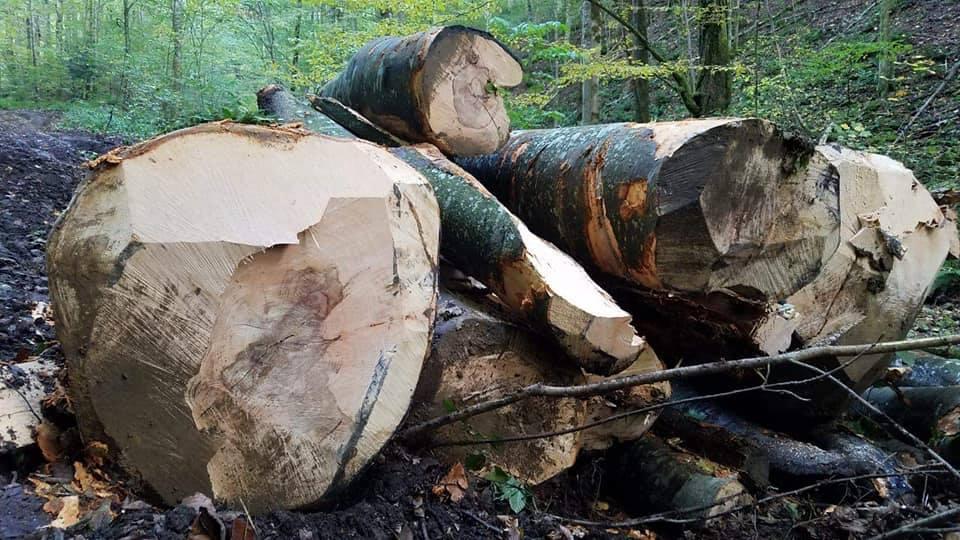 Minciunile ministrului Mediului încurajează distrugerea pădurilor